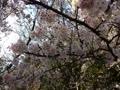 桜が綺麗な道☆