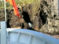 加賀の潜戸 新潜戸