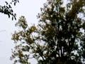 紅葉と雨と小鳥の声